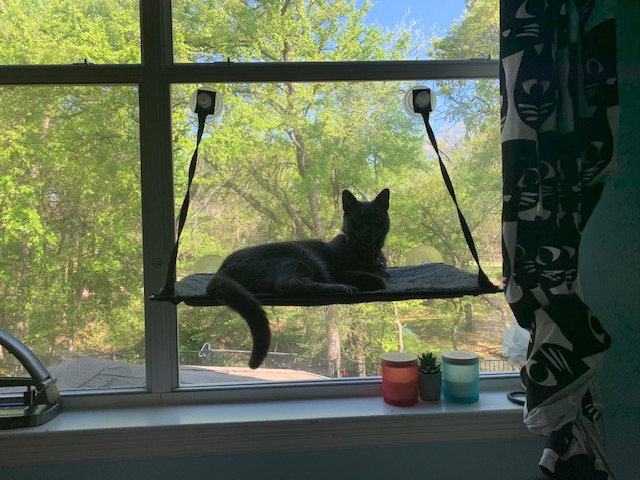 Shadow has a perch for judging everyone who walks by on the sidewalk below.