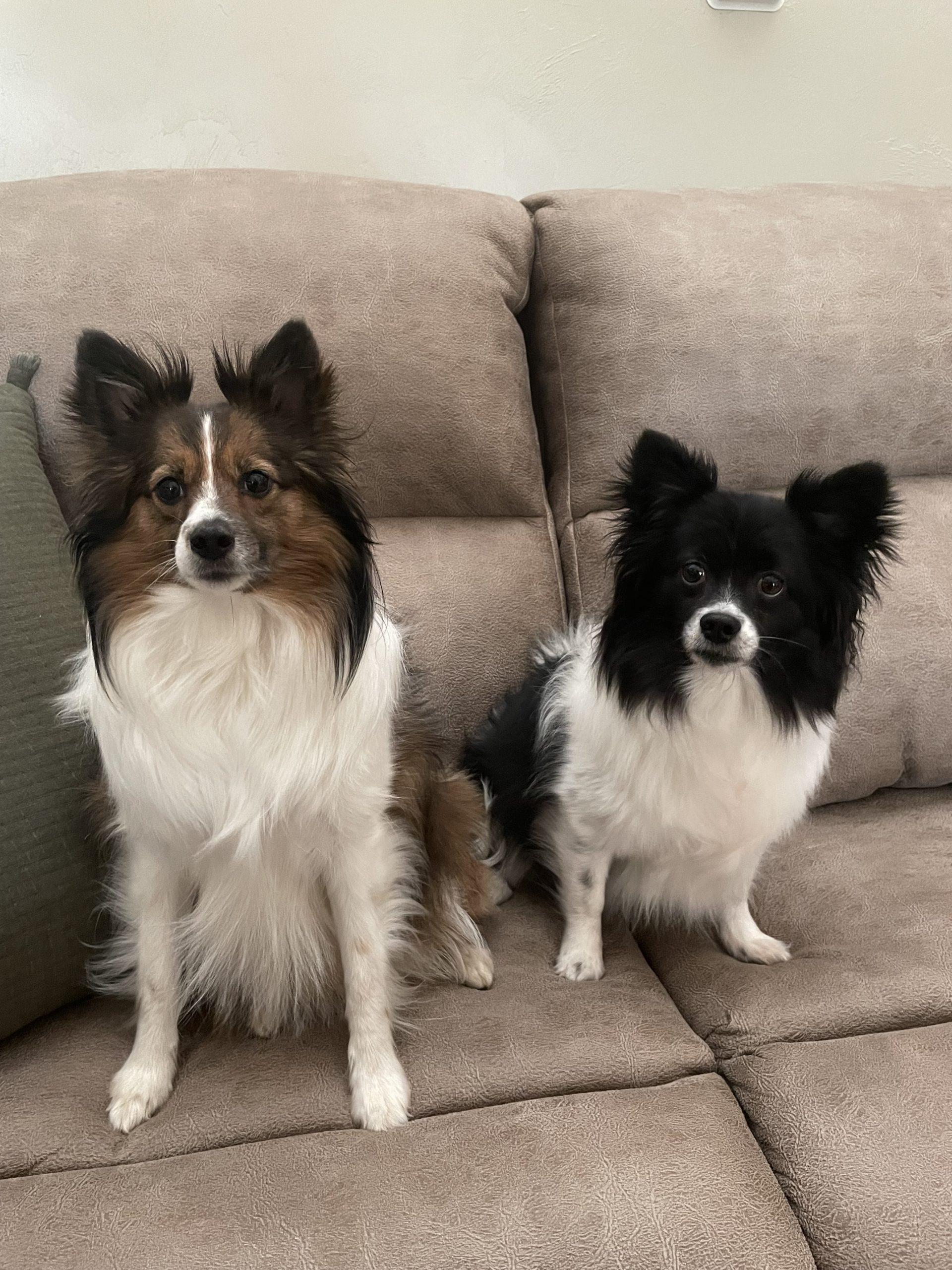 Hazel and Harper