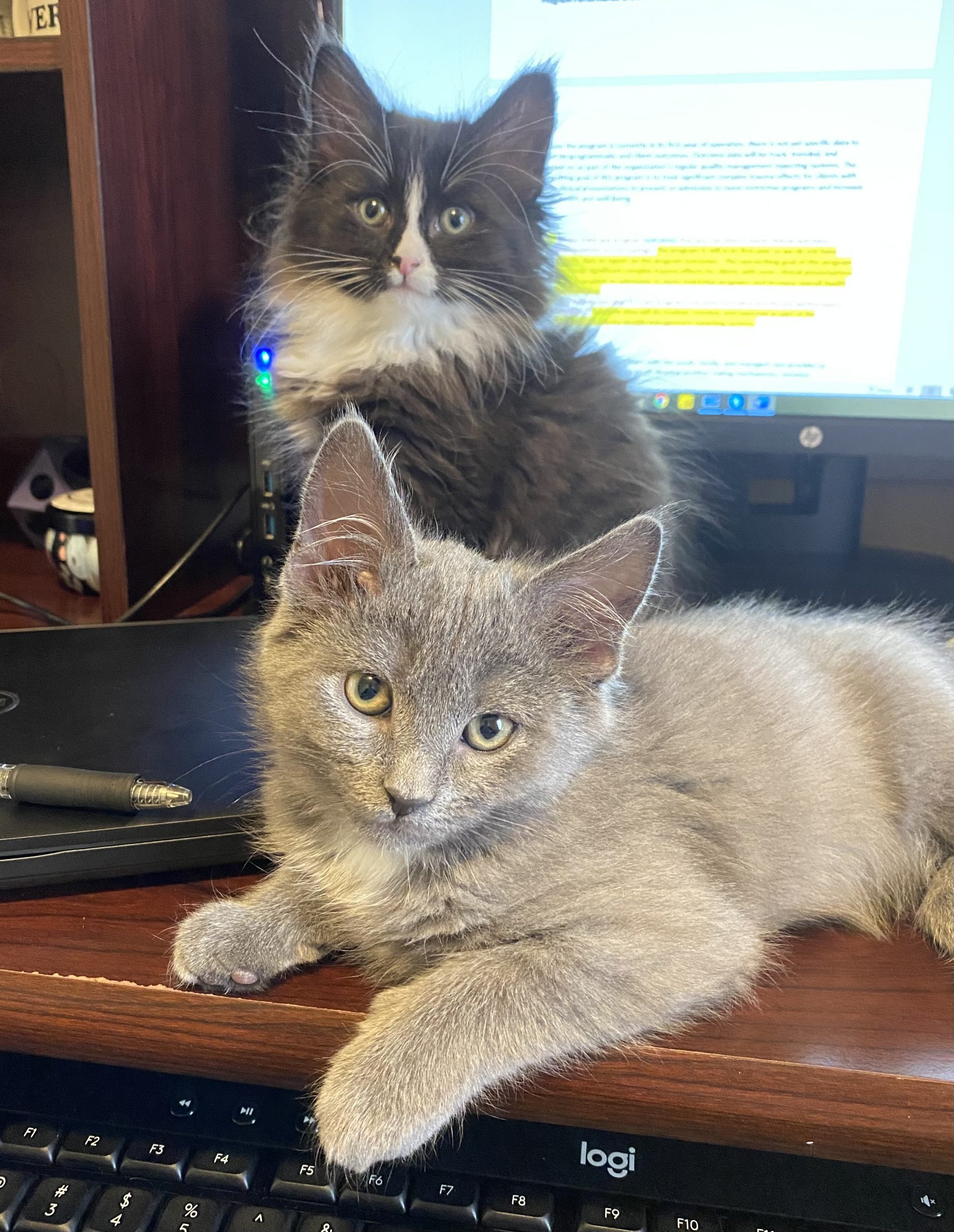 Remi and Mosey having a paw-fect day working from home.