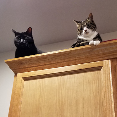 Sammy & Ali supervising, from the top of the cabinets, above my desk.